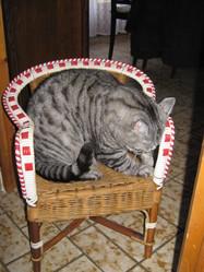Tomi, chat Gouttière