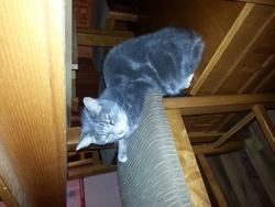 Tommy, chat Gouttière
