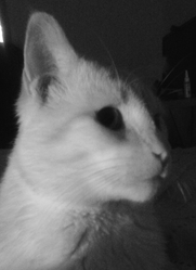 Tomy, chat