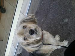 Tomy, chien