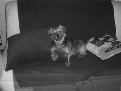 Tony, chien