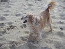 Tootsie, chien