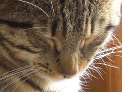 Topla, chat Gouttière