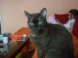 Tosca, chat