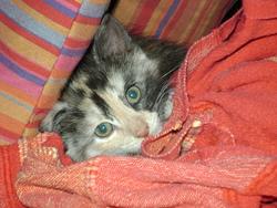 Spam, chat Gouttière