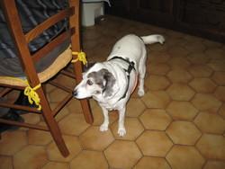 Toscane, chien
