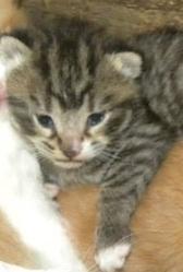 Toto, chat Gouttière