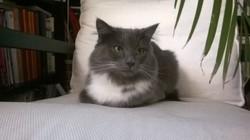 Totoro - Titou, chat