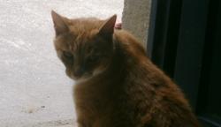 Toulouse, chat Gouttière