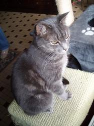 Toupie, chat Gouttière