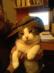 Toutoun, chat
