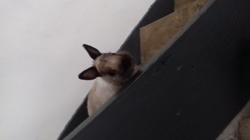 Toy, rongeur Lapin