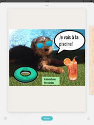 Trece, chien Yorkshire Terrier
