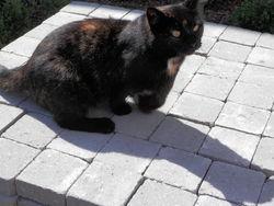 Tripatte, chat Gouttière