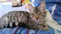 Trop Mignon, chat Gouttière