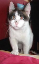 Tsuki, chat Gouttière