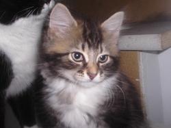 Tucson, chat Gouttière