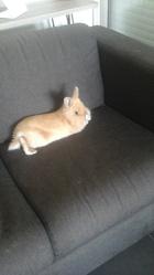 Tuffy, rongeur Lapin