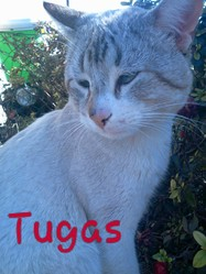 Tugas, chat