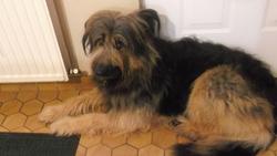 Tuiny, chien