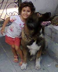 Tundra, chien Berger du Caucase
