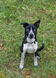 Turbo, chien Border Collie