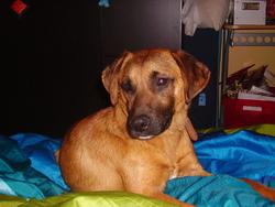 Turbo, chien