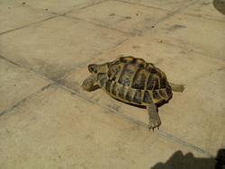 Turtle, autres