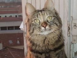 Twiggy, chat Gouttière