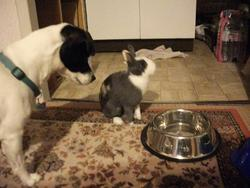 Twiny, rongeur Lapin