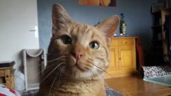 Twist, chat Gouttière