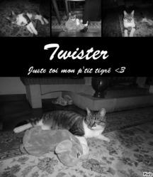 Twister, chat Européen