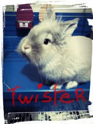 Twister, rongeur Lapin