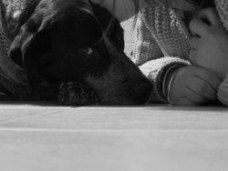 Twix Rip, chien