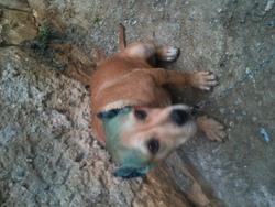 Tyna, chien