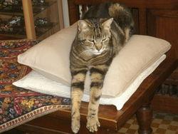 Typhon, chat Gouttière