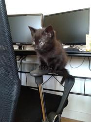 Tyrion, chat Gouttière