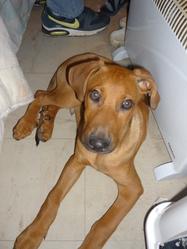 Tyson , chien