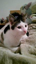 Tyson, chat Gouttière