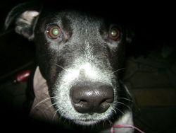 Tyson Didou, chien