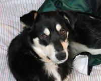 Laura, chien