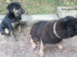 Tyson Et Iana, chien