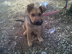 Tyzon Junior , chien