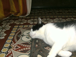 Ubick, chat Gouttière