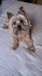 Ugo, chien