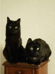 Ugo Et Ricky, chat Européen