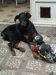 Ukraine, chien Dobermann