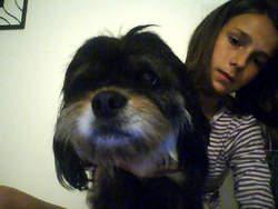 Ulka, chien Lhassa Apso