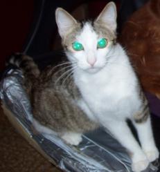 Ulysse, chat Gouttière