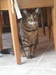 Uma, chat Gouttière